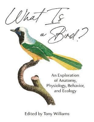 Tony D. Williams | What is a Bird? | 9780691200163 | Daunt Books